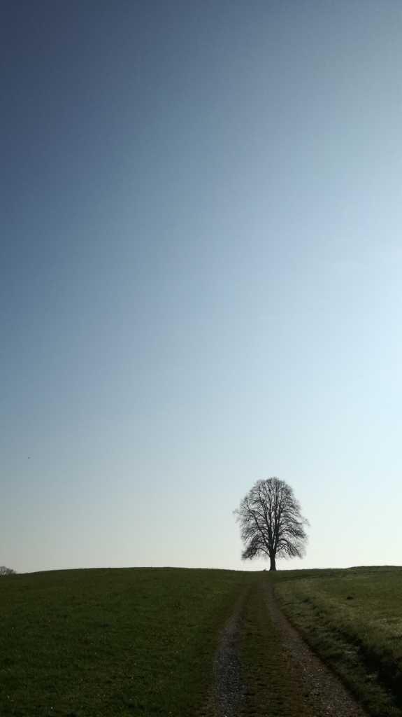 Noch einmal ein Bild der Linde, die eigentlich zwei sind |Johannes Ulrich Gehrke