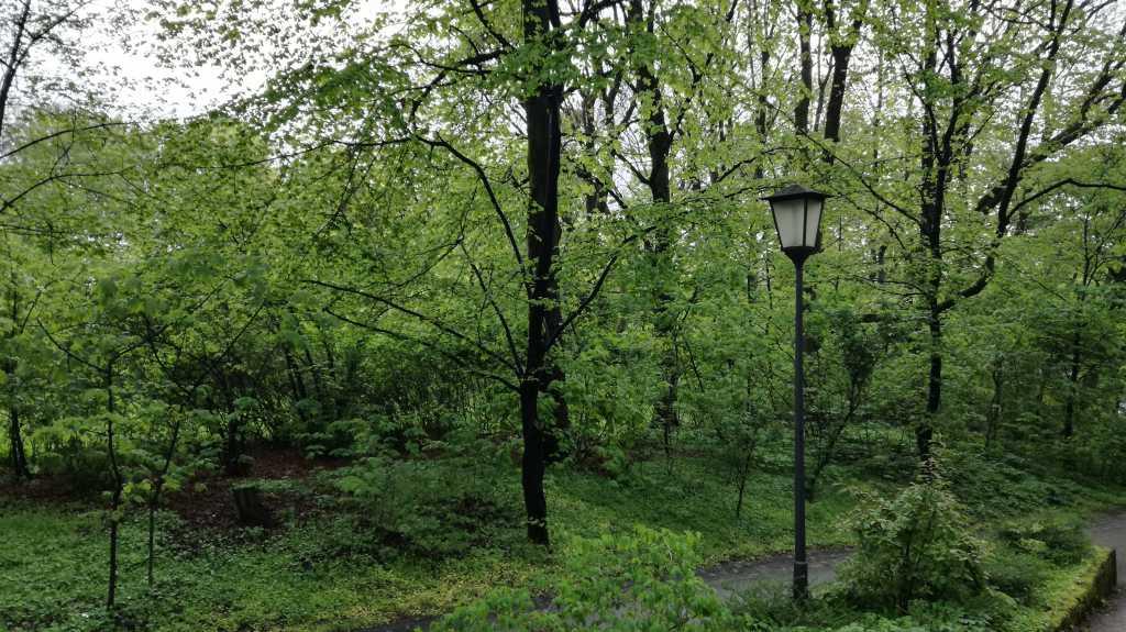 Ein Flecken Wald in München |Johannes Ulrich Gehrke
