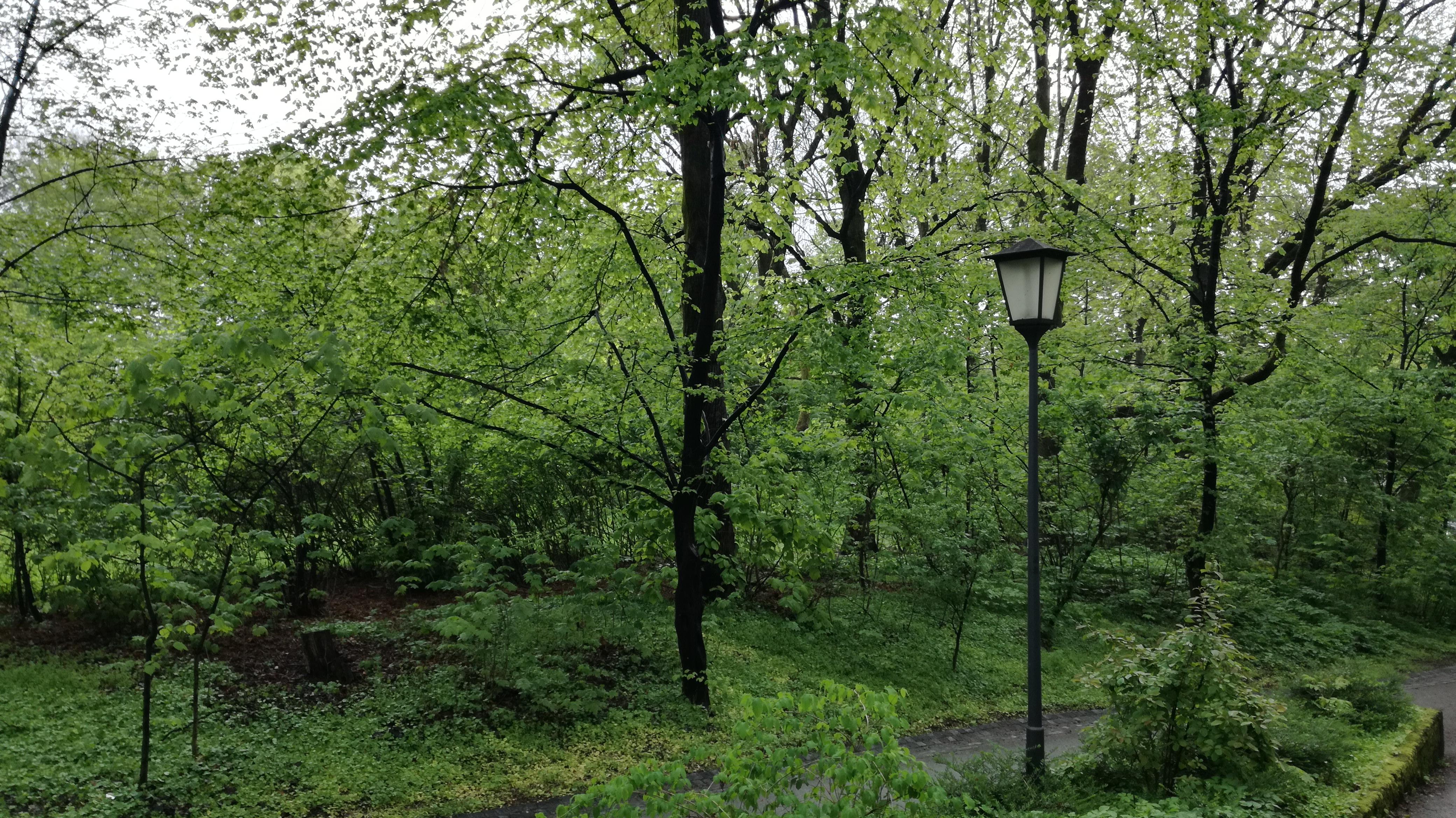 Ein Stück Urwald in München  Johannes Ulrich Gehrke