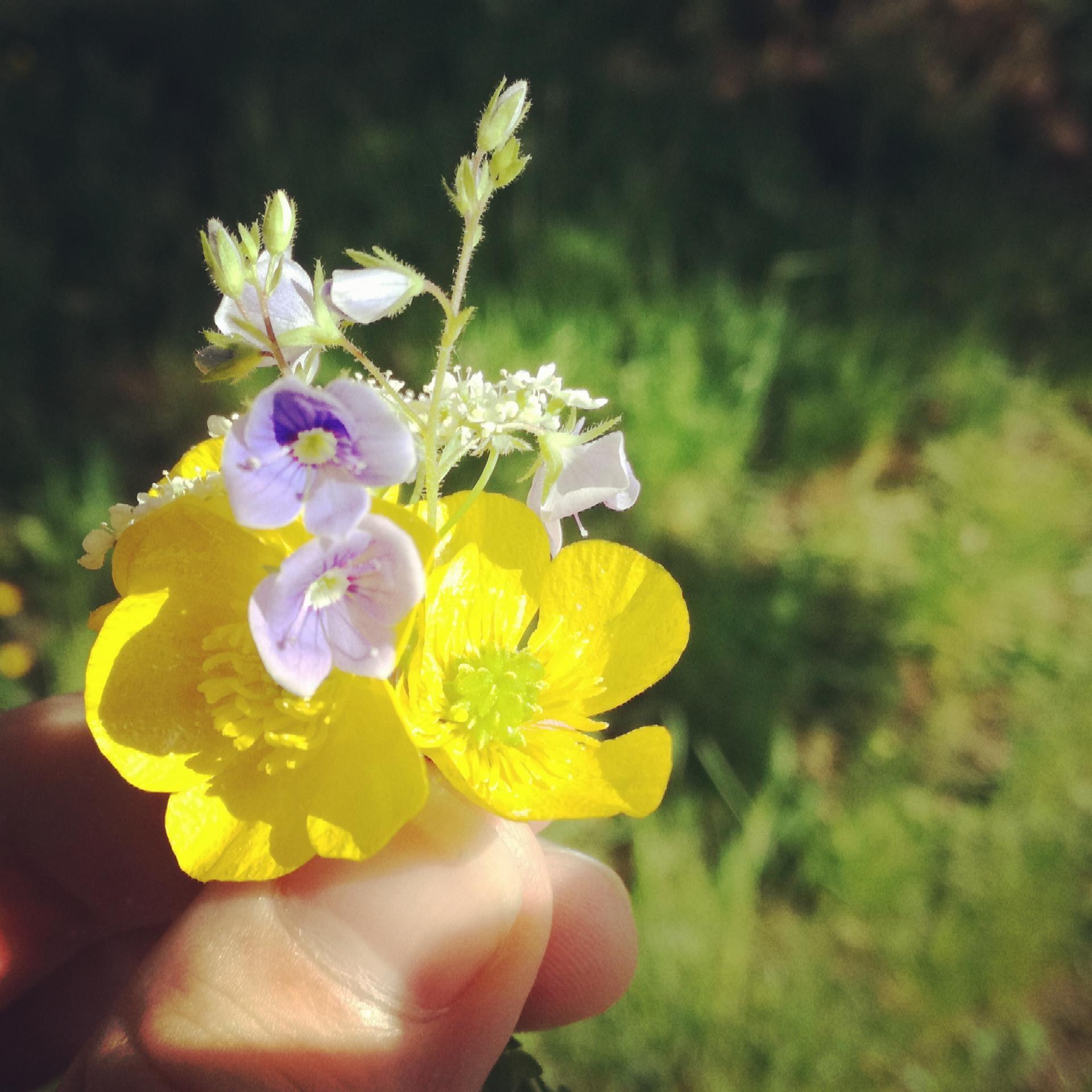 Münchens kleinster Blumenstrauß |Johannes Ulrich Gehrke