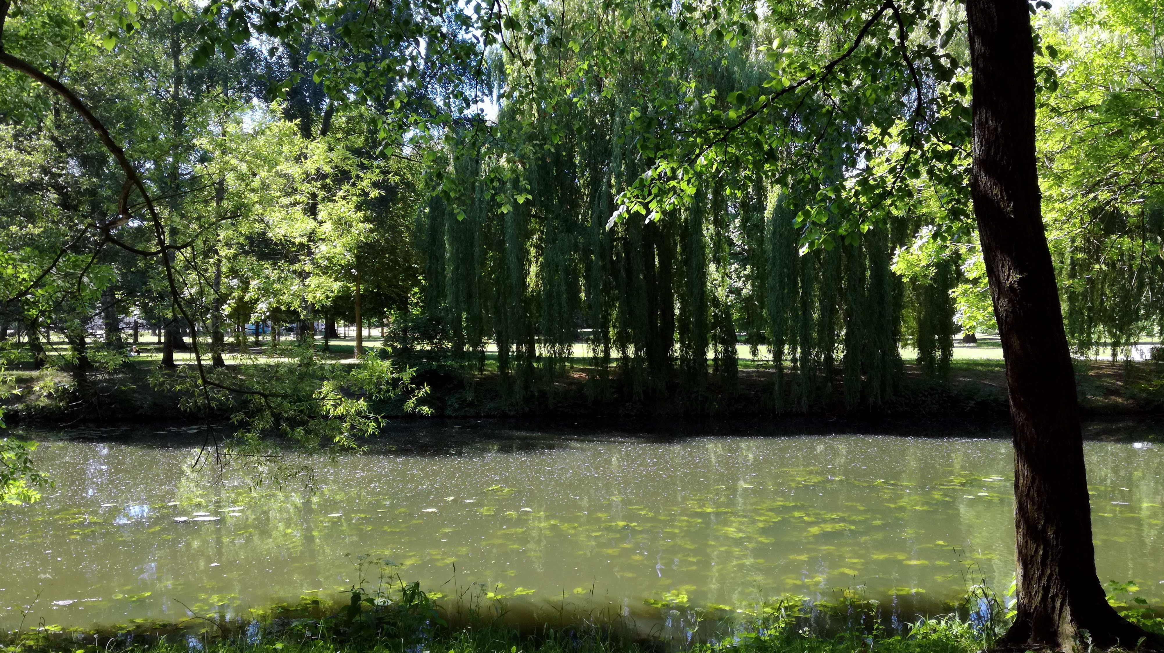 Biomasse im Kanal: Blick in den Schloßpark von König Wusterhausen |Johannes Ulrich Gehrke