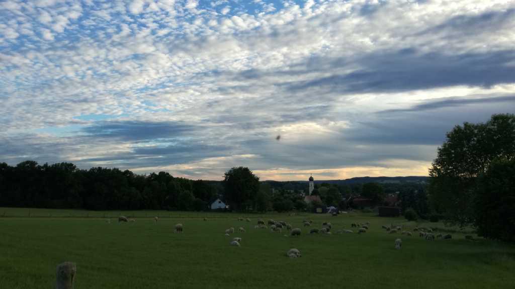 Schafe! Auf der Weide! |Johannes Ulrich Gehrke