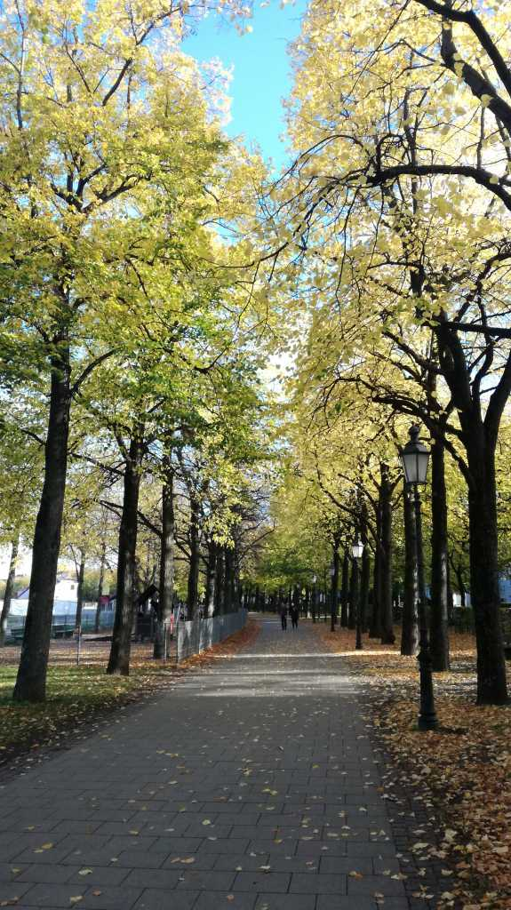 Herbstaufnahme der Theresienwiese mit und ohne Sonnenbrille |Johannes Ulrich Gehrke