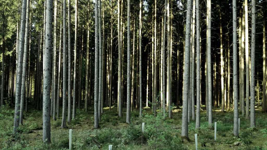 Wald, Wiese & Wirklichkeit am Wochenende |Johannes Ulrich Gehrke
