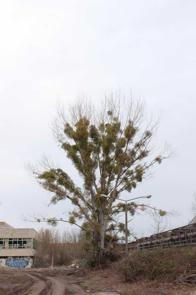 Baum auf Grau |Johannes Ulrich Gehrke