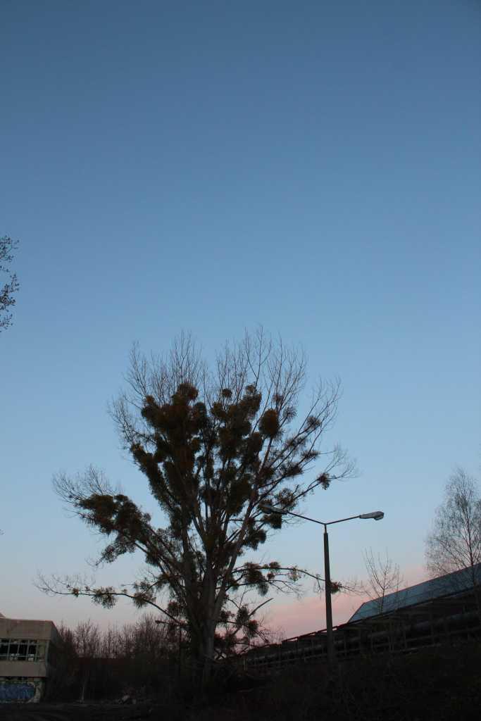 Baum im Himmel |Johannes Ulrich Gehrke