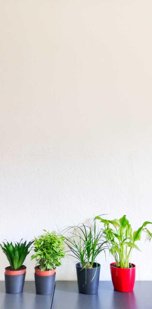 Pflanzen im Büro sind was schönes |Johannes Ulrich Gehrke